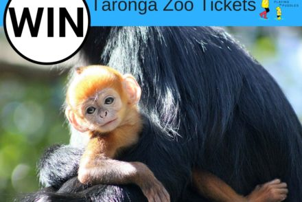 WIn Taronga Zoo tickets with Playing in Puddles