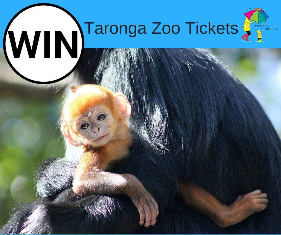 Taronga Zoo Christmas Party: WINNER Of 2 Family Passes To Taronga Zoo This Christmas