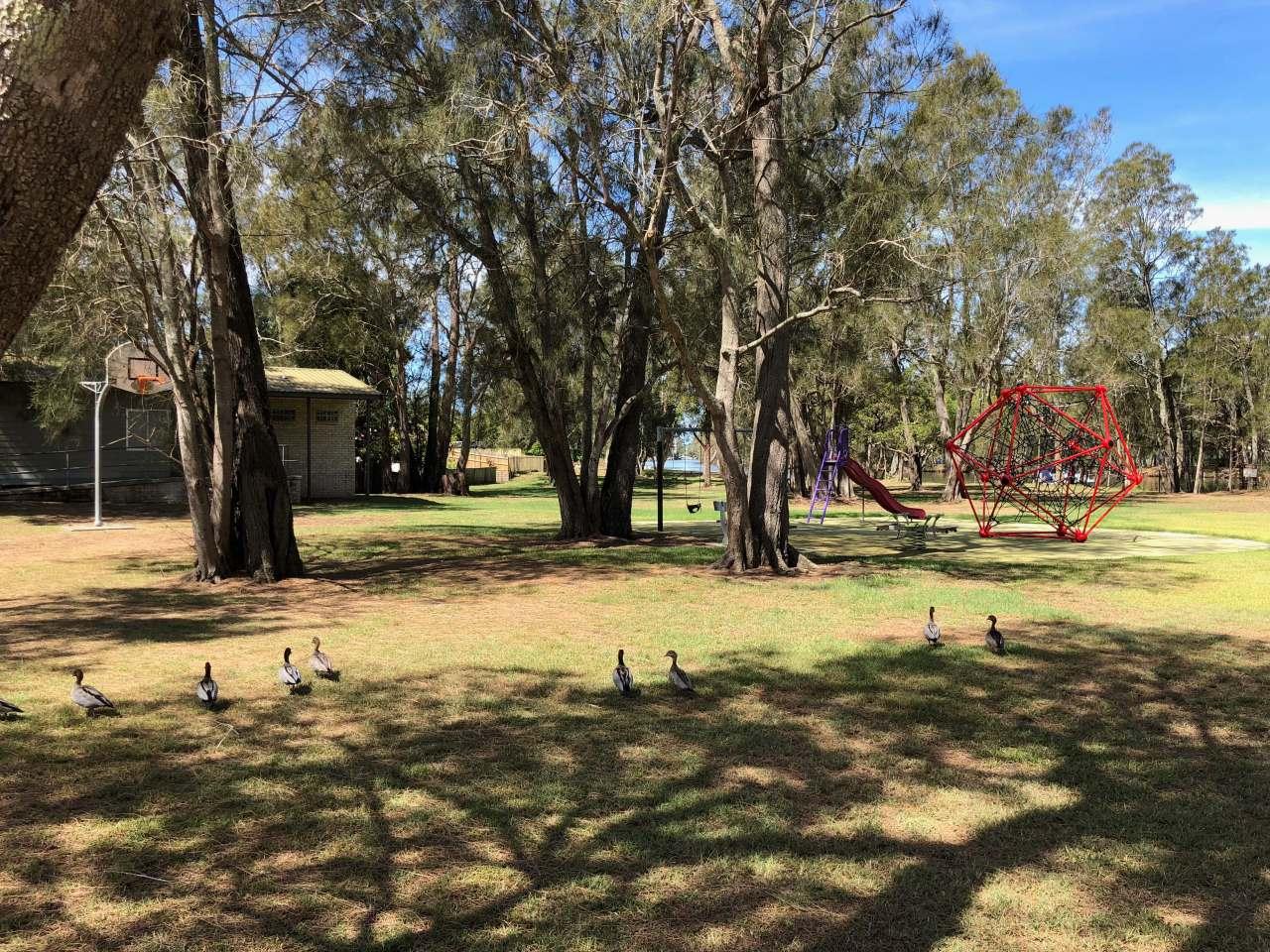 Ducks at Sunshine Reserve, Chittaway