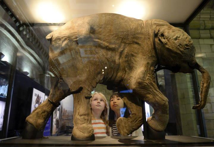Lyuba at The Australian Museum