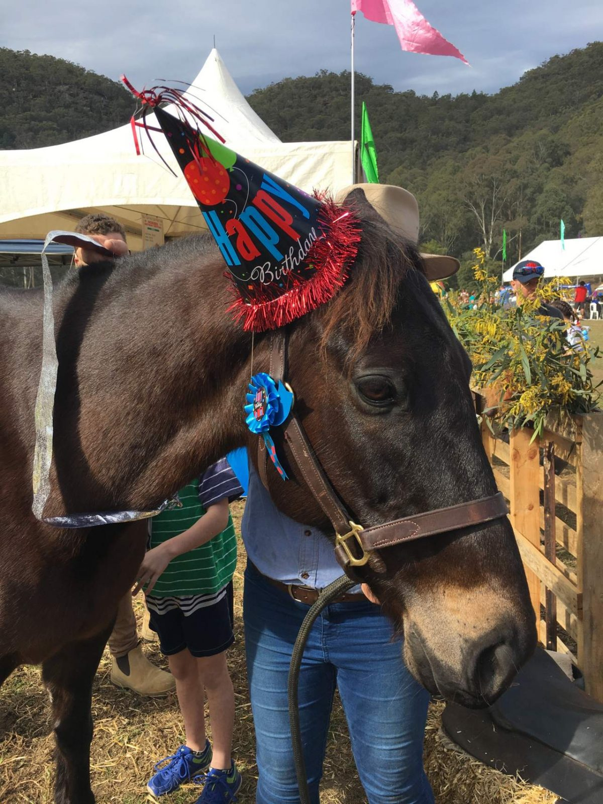 2017 Horses Birthday Festival CPlaying In Puddles