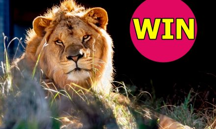 Take our Reader Survey for your Chance to WIN 2 Family Passes (That's 8 Tickets) to Taronga Zoo!