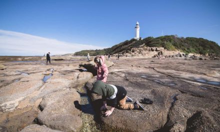 A Visit to the Norah Head Lighthouse Reserve and Rock Shelf is a Fantastic Family Day Out